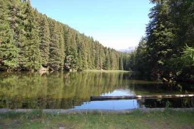 Forest pond Fließ