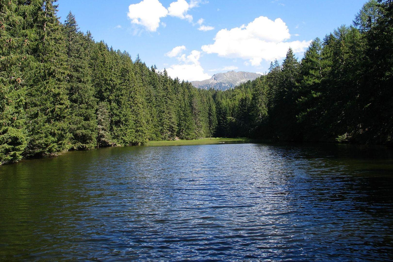 Waldweiher Fließ