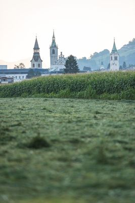 Fields in Schwaz