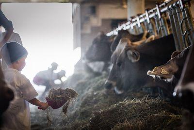 DIENSTAG: Besuch am Bauernhof (Kindertag) 5