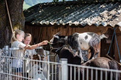 DIENSTAG: Besuch am Bauernhof (Kindertag) 8
