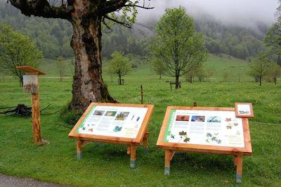 Nature Trail Eng Alm - Großer Ahornboden 1