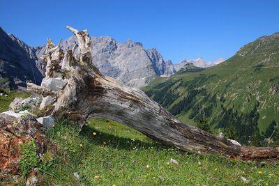 Uo to the die Binsalm Alp in the Karwendel 1