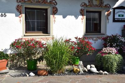 Haus Dudler Blumen.JPG