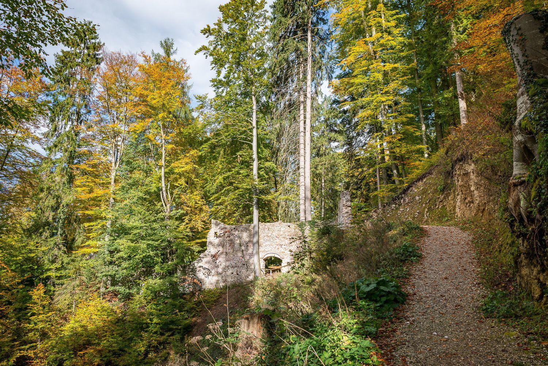 MONTAG: Bucher Wasserfall, 200 jährige Fichte und Burgruine Rottenburg (Familientag)