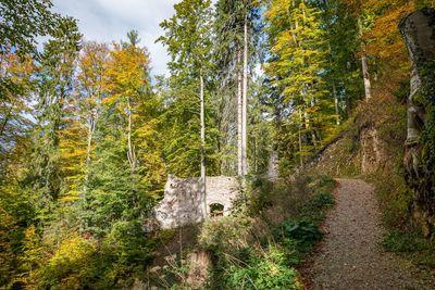 MONTAG: Bucher Wasserfall, 200 jährige Fichte und Burgruine Rottenburg (Familientag) 2