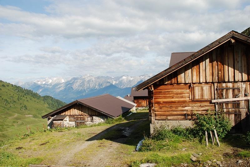 Nurpensalm Alpine Pasture